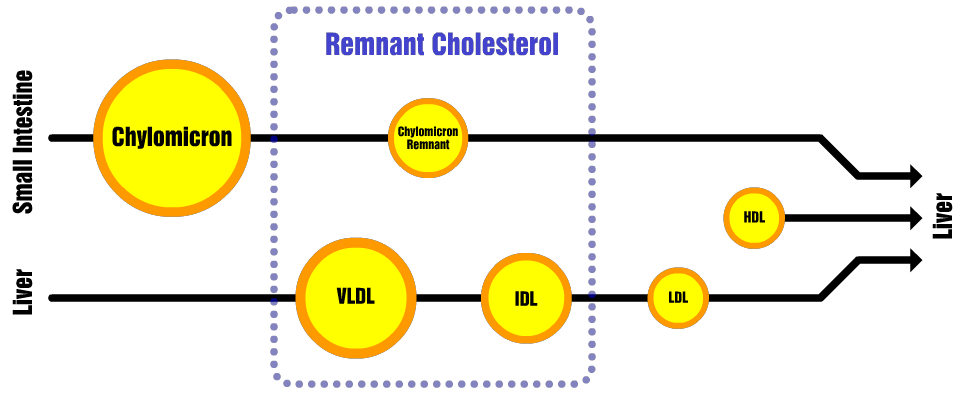 Remnant Cholesterol What Every Low Carber Should Know